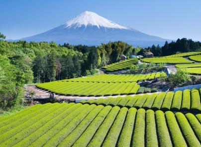 יפן- ארץ הסושי והסאקה