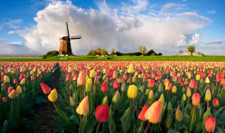חלומות מתגשמים הולנד, בלגיה, צרפת
