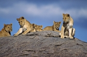 GTAN ORGANIZED TOUR TANZANIA 8 DAYS