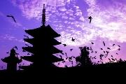 יפן בטיסה ישירה - טוקיו , קיוטו , טאקיימה מצומוטו