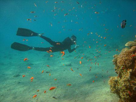 APNEA צלילה חופשית  - APNEA צלילה חופשית