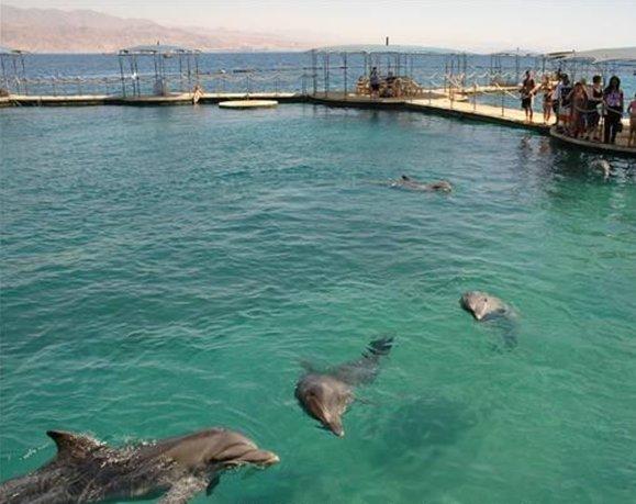 ריף הדולפינים - ריף הדולפינים